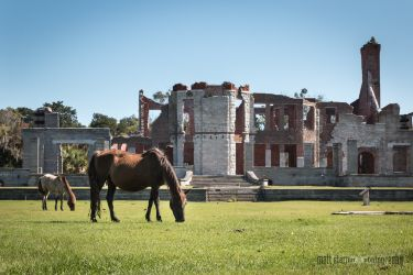 spring-break_cumberland-island-2028