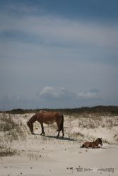 spring-break_cumberland-island-2113