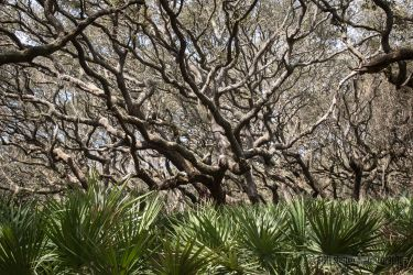 spring-break_cumberland-island-2123