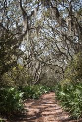 spring-break_cumberland-island-2126
