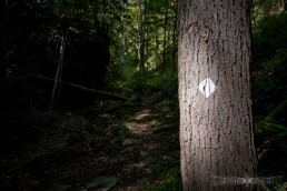 red river gorge - trail 221